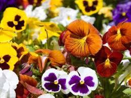 Uso das Flores na Magia e na Bruxaria
